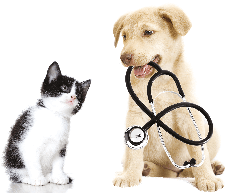 Tierarztpraxis Ellinger & Thumm - HEADER - Hauptseite