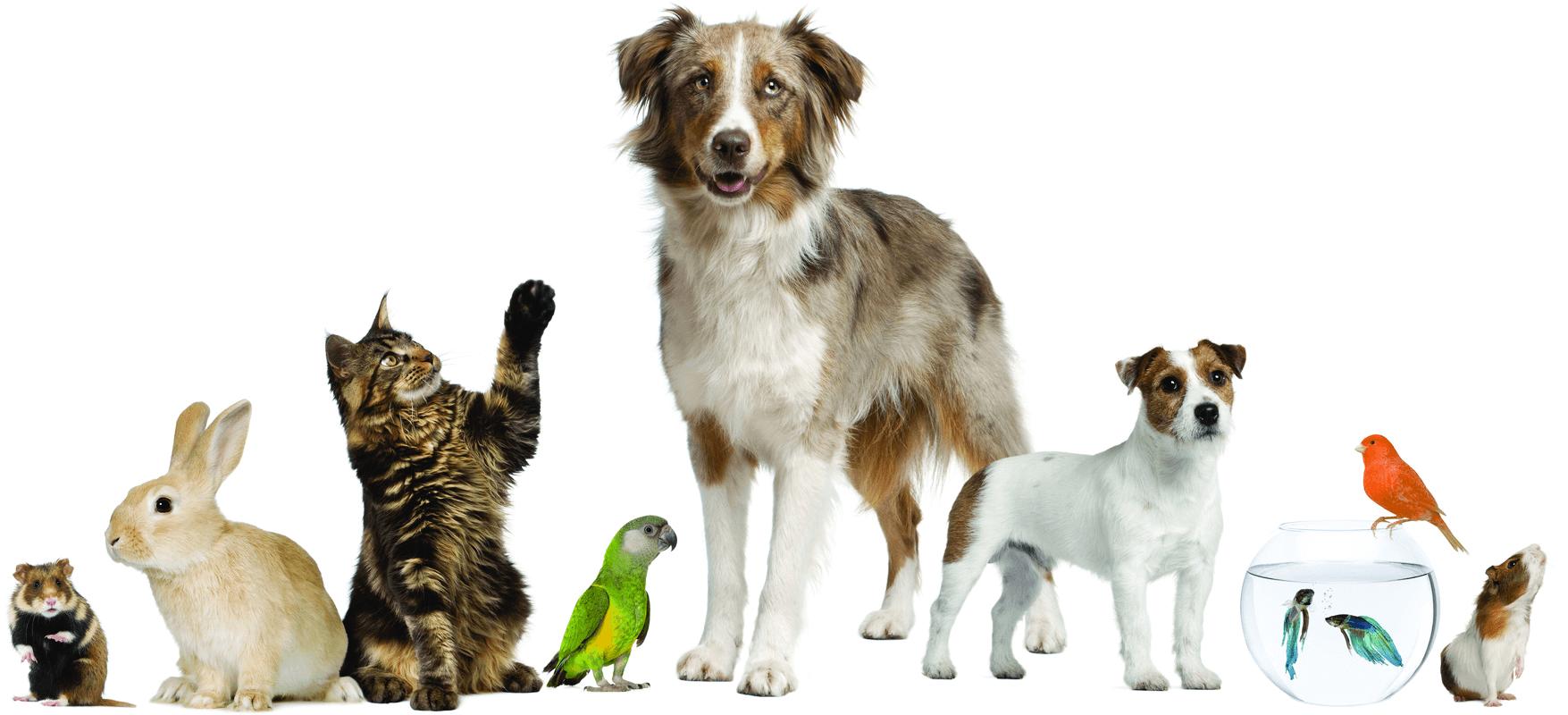 Tierarztpraxis Ellinger & Thumm - HEADER - Unterseite